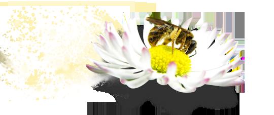 Veps sitter på blomst, spreder av pollenpartikler