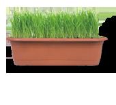 Bilde av en boks med gress