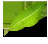 Bilde av et grønt groblad